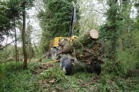 Picking up the fallen oak