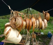 Elm bark peeled ready for use