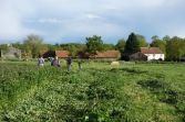 Mowing the nettles