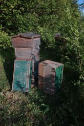 Safe in the Warre hive