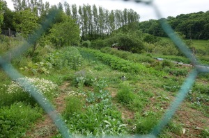 One of the allotments