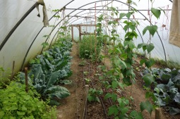 Poly tunnel A