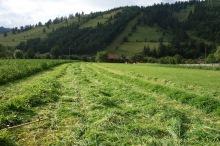 A good few Romanian acres mown