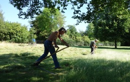 MOWING (not scything)