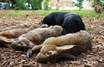 Got a few pesky rabbits