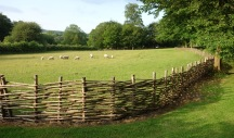 Traditional fences and sheep