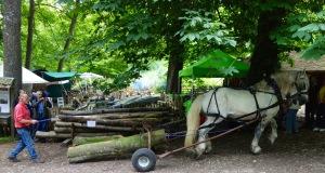 Skilled horsemanship