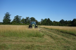 Late hay mowing