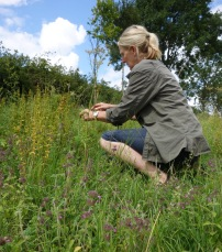 Picking the wildflower seed on the estate to enhance the folly field