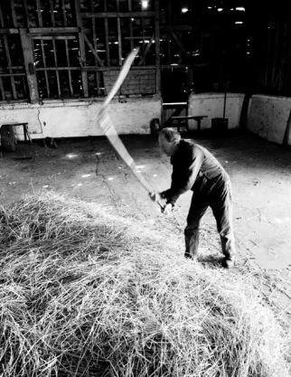 John put to work thrashing barley