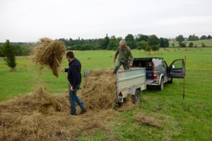 Clearing up some sucked hay from the folly field