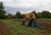 Ploughing t outhe thistles