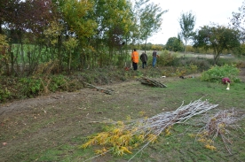 The hedge laying course at Wimpole
