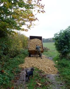 Paul spreading the last 20 ton load of stone