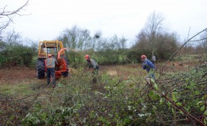 Clearing the scrub in the south avenue
