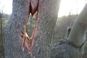 Bat roost