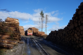 Carting timber