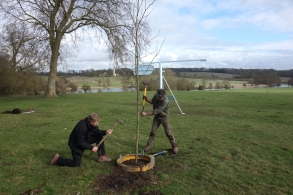 Erecting the guard for the tree that Helen Gosh planted on the 23rd February