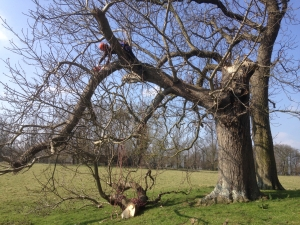 Reducing the extended Horse chestnut limb