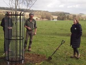 CB300 London plane tree planted