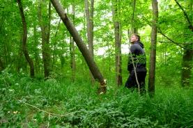 Matt felling an elm