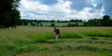 The English scythe in action