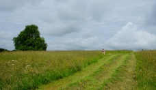 The quarter acre