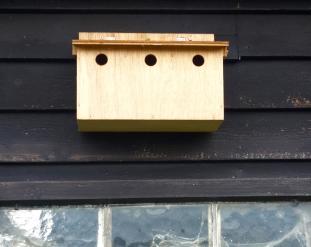 House sparrow box