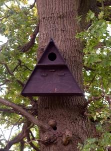 An erected barn owl box