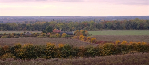 The colourful hedges by Rectory farm