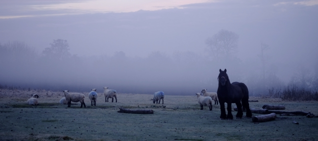 John the horse with some mates from Oxford!