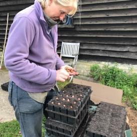 Planting acorns