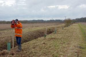 Planting trees on the farmland