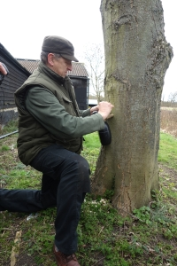 Tapping the sap