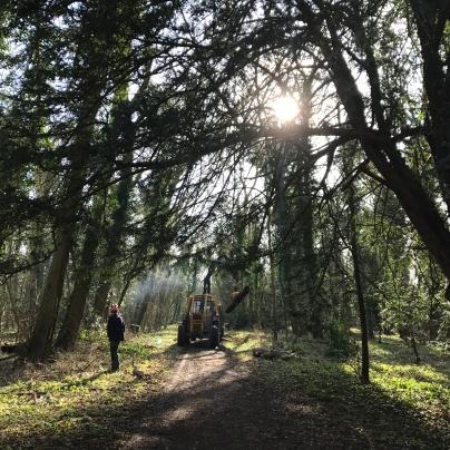 Making safe along the woodland walk
