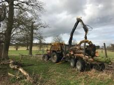 Carting away the timber