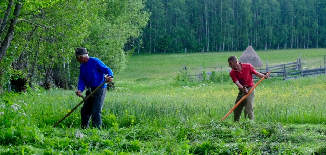 Mowing the hay meadow